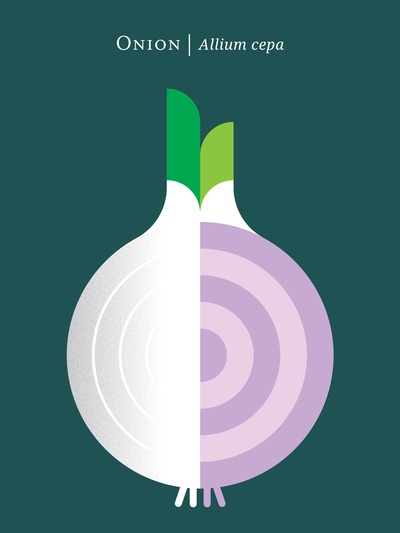 Vegetable-Onion_Print