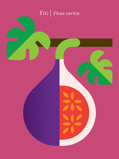 Fruit-Fig_Print